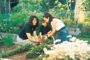 Acadia Park community garden plot, UBC.
